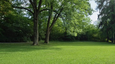 Lawn Care for Landscapers